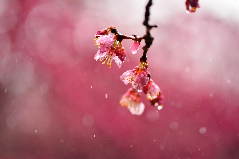 Cherry Rain Nude Photos 49